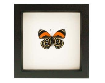 Framed Butterfly 88 Excelsior UV blocking Glass