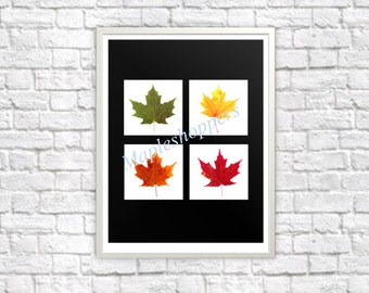 Maple Leaf Colors of Fall Autumn Printable Wall Art DIY You Print and Frame  Autumn Leaf Prints PNG Format Black Background
