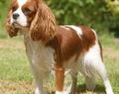 2 Custom Dog Signs for Laurel