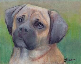 original art  aceo drawing tan mastiff dog