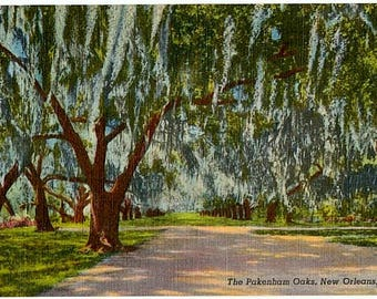 Vintage New Orleans Postcard - The Pakenham Oaks (Unused)