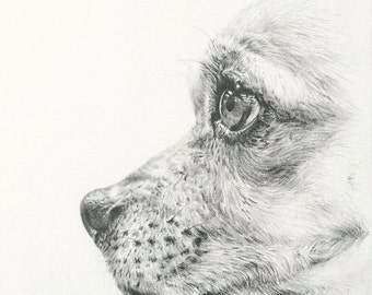 For Your Custom Pet Portrait Drawing   Book Now for 2017 Birthdays   Mother's Day   Father's Day