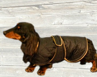 Miniature Dachshund Winter Coat, Custom made with quilted nylon and tummy panel