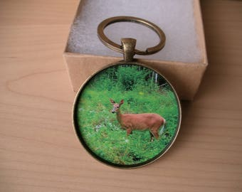 Maine Doe WhiteTail Deer Photo Key Chain, Original photo, Dad Gift, Hunter Gift, Nature Lover, Gift for Him or Her