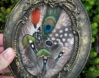 Exotic Feather Collection in Gothic Frame