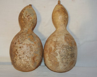 Set of Penguin Gourds, #2
