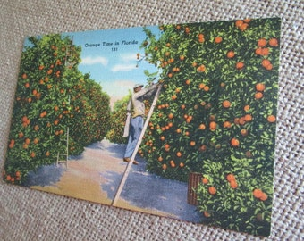 Tichnor Brothers Linen Postcard, Orange Grove, Florida, 1940, Stamped