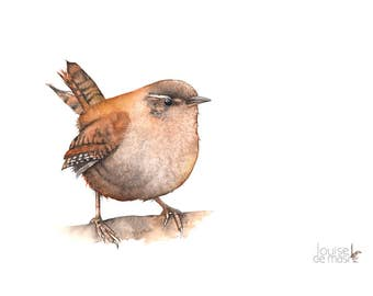 Wren print of watercolor painting A4 size W20517, wren watercolor painting print, Bird print, wildlife art, Wren wildlife print