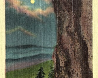 Skyland, Shenandoah, National Park, Virginia - Linen Postcard - Vintage Postcard - Unused (W)