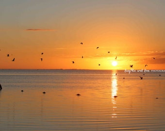 Yellow Sunset Beach Photo, Ocean Seagulls Photography, Ocean Sea Red Sky Art, Tropical Coastal House Decor, Nautical Home Decor Wall Art