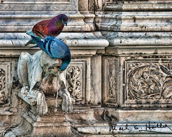 Siena Italy Town Square Tuscany Pigeons on Fountain 661
