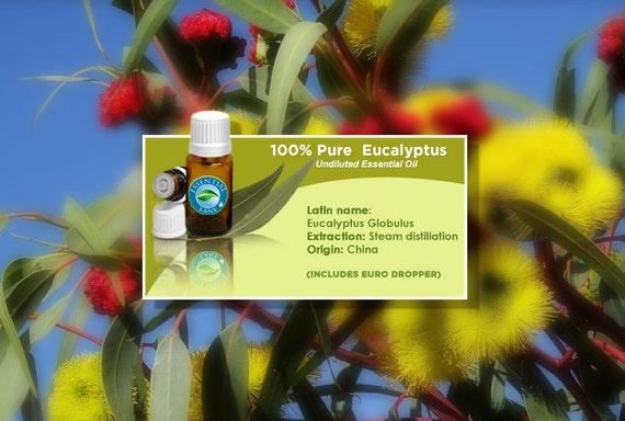 Eucalyptus Essential Oil, Eucalyptus, Essential Oil, Eucalyptus Oil, Essential Oils, Pure Essential Oil, Aromatherapy Oil, Massage Oil