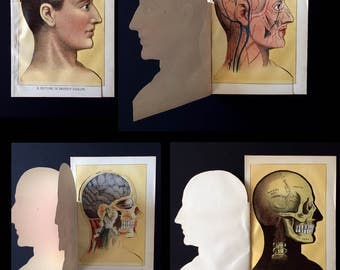 Antique 1912 Medical Anatomy Diagram Fold Out Chromolithograph Bookplate Head Brain Skull Muscles Svankmajer Collage Material