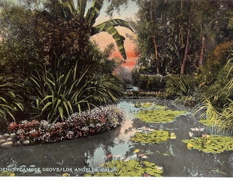 Vintage Postcard...California, Los Angeles- Water Gardens, Sycamore Grove...Unused...no. CA0016