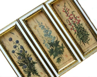 Antique Botanical Repro Prints Delphinium Coral Snapdragons Blue Thistle Set of Three Gold Gilt Frame Illinois Moulding