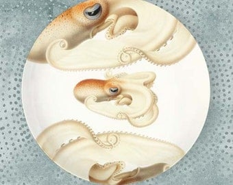 Octopus III Velodona melamine plate