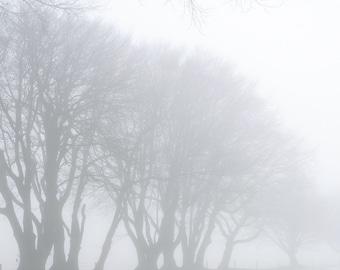 Cold winter morning at Dartmoor.