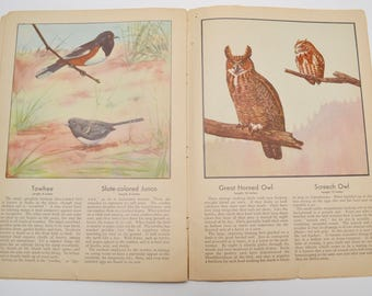 "1930s bird book, ""Birds"" by Frank G. Ashbrook, United States Department of Agriculture, Illustrations by Paul Moller"