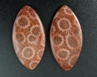 Fabulous  pair of fossil coral cabochon , Jewelry making supplies B6630