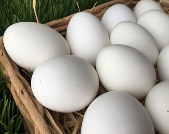 One Dozen Large and Medium Duck Eggs, Easter Eggs, Eggs for Crafts, Home Decor