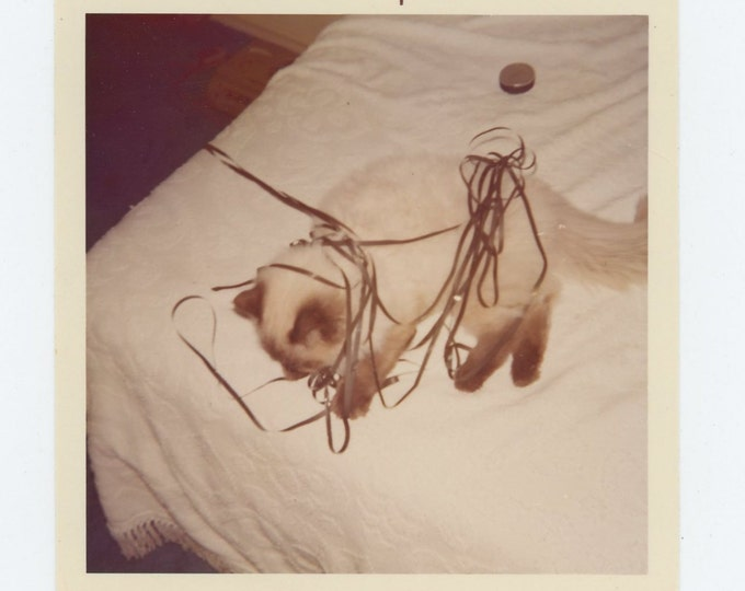 Vintage Snapshot Photo: Cat Tangled in Cassette Tape, 1975 (72550)