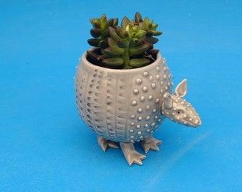 Small Armadillo Planter, Succulents, Air Plants