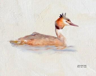 bird print, grebe print, bird art, wildlife print, wildlife art, wildlife photography, wildlife picture,  bird photography, nature print