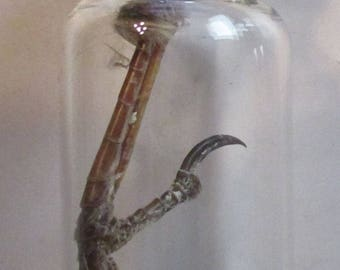 Dried House Sparrow Foot in Small Corked Glass Jar