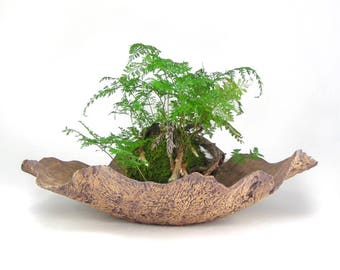 Large Ceramic Bark Pot, Fluted Bonsai Planter, Bonsai Pot, Tan Succulent Planter, Shallow Irregular Plant Pot, Centerpiece Planter 11-16-28