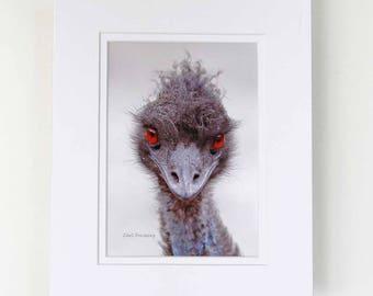 Photograph - 5 x 7 - Emu