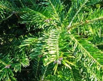 1lb Balsam Fir Needles Adirondack USA Grown Wild Harvested Cut Up // Christmas Tree Needle Potpourri Traditional Holiday Fragrance Craft