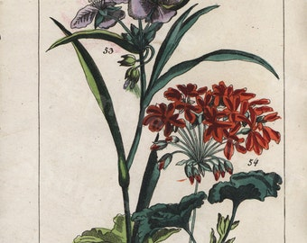 Original  Antique Natural History Botanical Wild Flowers II  Hand Colored Engraving