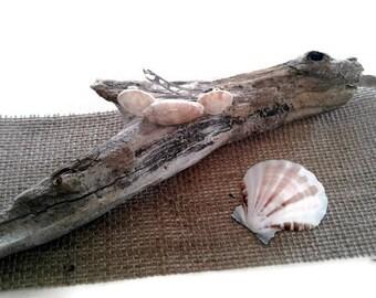 Beach Wedding, Seashell Hair Clip, Mermaid Beach Hair Accessories, Natural Lettered Olive Shell Hair Barrette, Gift for Teen Girls or Women
