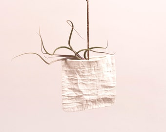 Ceramic envelope with Baileyi air plant