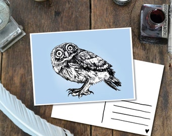 Owl - Postcard with Illustration, owl small pygmy ink light blue