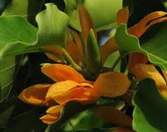 Champaka Organic Soap - Vegan Handmade Soap, Nag Champa Soap, Organic Soap, Natural Skin Care, Essential Oil Soap, Indian Flower Soap