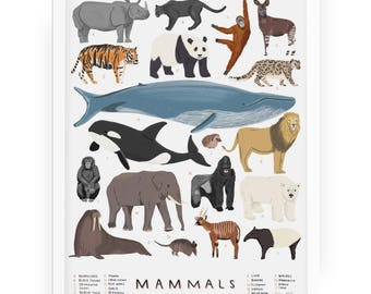 Mammals illustrated print - mammals illustration animal print animal illustration mammal natural history