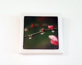 Original photographic tile wall hanging - blossom