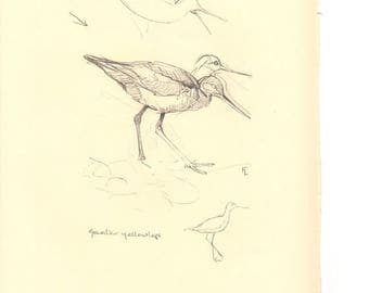 50% Off Estate Sale Vintage Black Turnstone, Greater yellowlegs, 1970s Frameable Sketch, drawing, West Coast P 136, Wall Art Print of Bird b