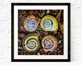 Snail Art, Snail Shell, Snail Gift, Colorful Wall Art, Shell Art, Spirals, Nature Wall Art, Snail Print, Woodland Print