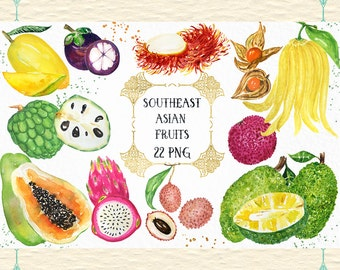Southeast Asian Tropical Fruits watercolor clipart. Digital clipart hand drawn.  fresh tropical  fruits, fruit logo, branding