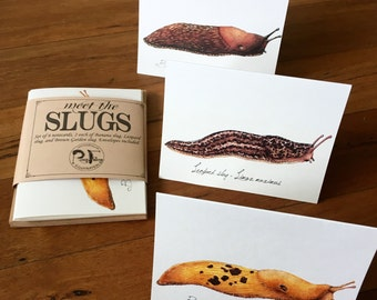 Slug Notecard Set, set of 6 blank cards with Banana slug, Leopard slug, and Brown Garden slug illustration