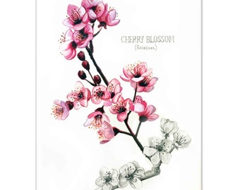 Cherry Blossoms Watercolour painting - Limited edition prints (100 only)