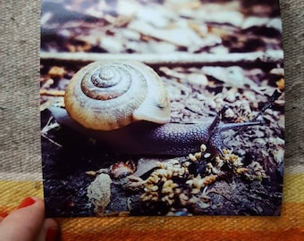 Small Snail Photo