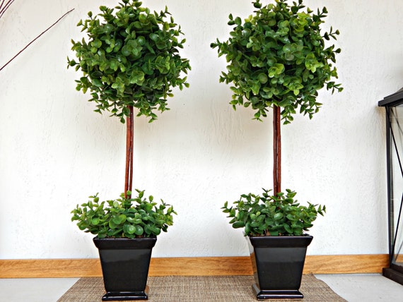 Two topiary trees topiaries small indoor trees boxwood - Small trees for indoors ...