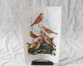 Bird Print Nº 105 | Birds of America