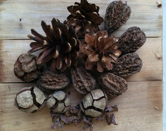 Pine Cones Decoration, Natural Home Decoration, Organic Wreath Supplies