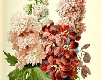 flowers-29364 - Delphinium pink red white bouquet of flowers digital picture image high resolution large size clipart floral botanical paper