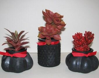 Faux Succulent Planter in Black Glass, Desk Accessory, Artificial Succulent Arrangement, Tabletop Decoration, Succulent Gift