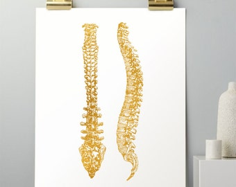 Spine Art Anatomy - Anatomy Art - Real Gold Foil Print - Human Anatomy - Chiropractic Art - Chiropractor Gifts - Medical Office Decor